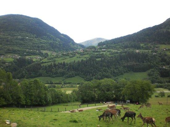Alpen Wildpark: d