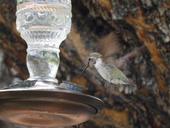 Desert Riviera Hotel: Hummingbirds were great to watch