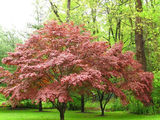 Union Church of Pocantico Hills: A flowering tree did its best to add color to the outside of the church