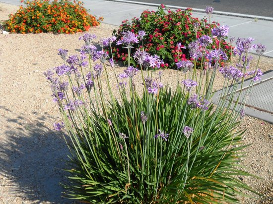 Rodeway Inn & Suites: Pretty Plants Outside Hotel