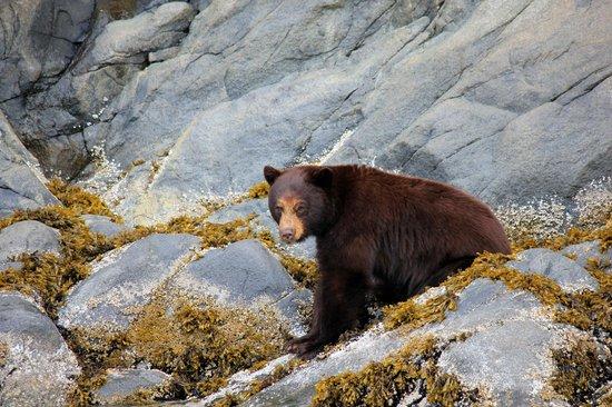 Eagle Eye Adventures: Cinnamon Bear