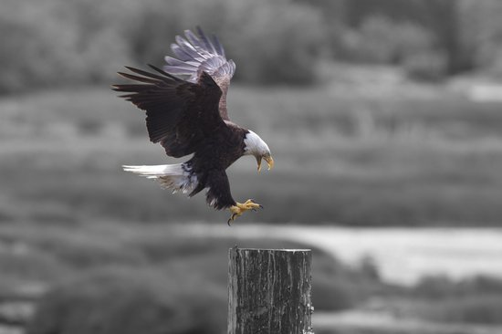 from our Grizzly bear expedition - Picture of Eagle Eye ...
