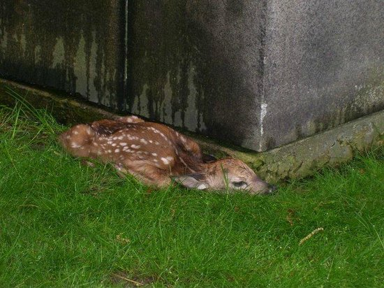 Lake View Cemetery: Extreme closup of fawn by mosuleum
