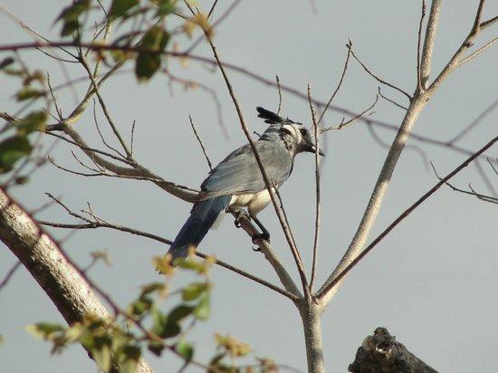 Rancho Cecilia Nicaragua: Birds! Rancho Cecilia
