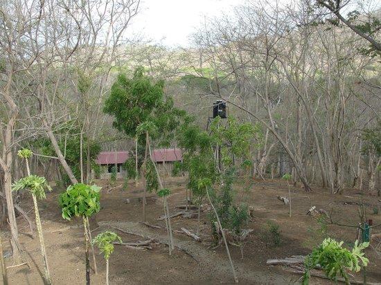 Rancho Cecilia Nicaragua: Jungle Cabanas, Rancho Cecilia