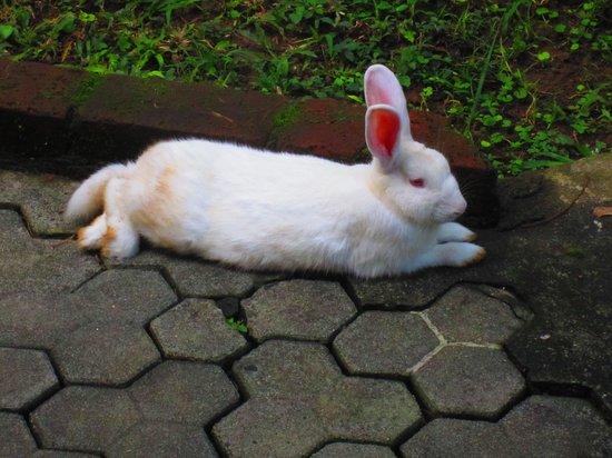 B&B Home Stay Griya Jungutan : snowwhite kelinci