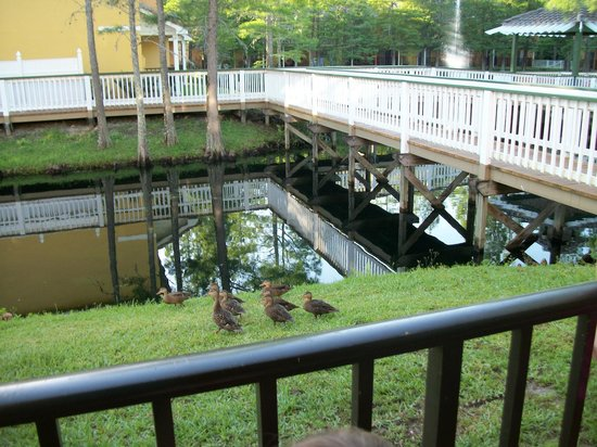 Best Western Premier Saratoga Resort Villas: Ducks that visited our patio daily!