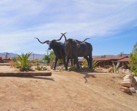 Pioneertown Motel : Texas Longhorns Greeting