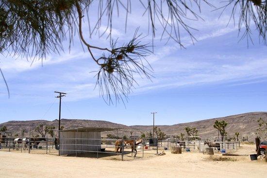 Pioneertown Motel : Horse Corrals