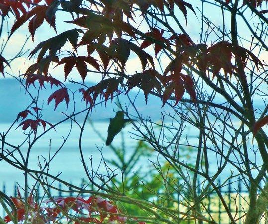 Oak Bay Beach Hotel : Hummingbird joined us on patio