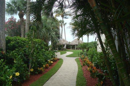Pointe Estero Beach Resort: el área de la pileta comunica con la playa