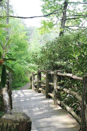 Highlands Biological Station, Nature Center and Botanical Gardens: Pathway bridge