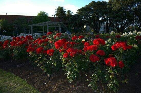 Parnell Rose Gardens : parnell