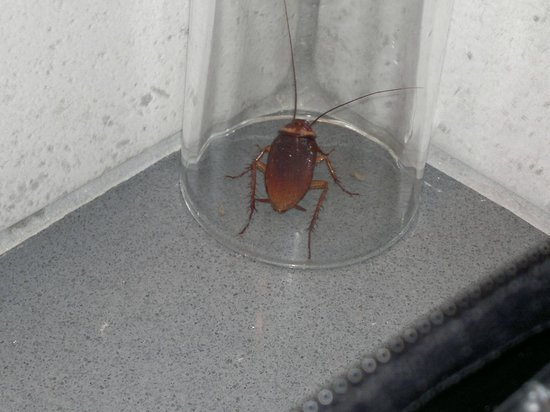 The Huge Cockroach In Our Bathroom Picture Of High Beach Resort - Cockroach in bathroom