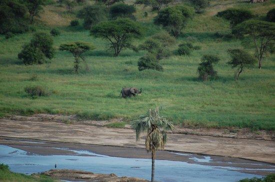 Tarangire Safari Lodge: Male elephant across the river