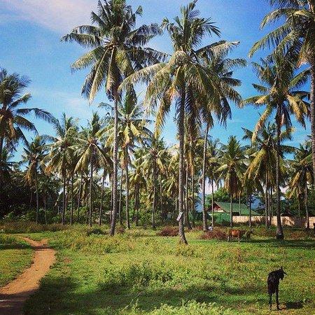 Scallywags Mango Retreat : Way to the Beach from Mango retreat thru charming village