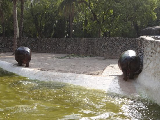 Mahendra Chaudhary Zoological Park: Two of them