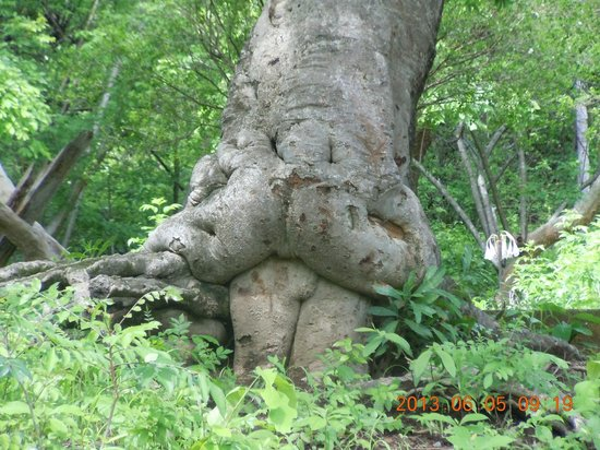Costa Rica Private Tours: Sexy Tree beside Road