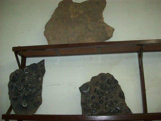 Discovered Moroccan Sahara Meteorite: fdd