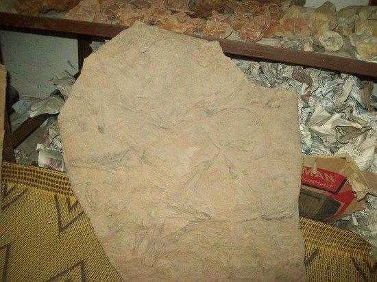 Discovered Moroccan Sahara Meteorite: creneuid