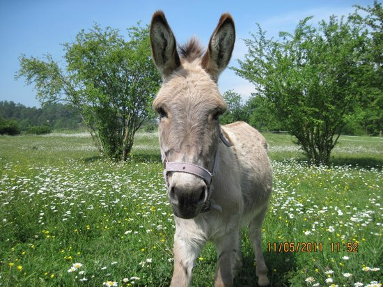 Teuillac, Francia: One of our friendly donkeys.