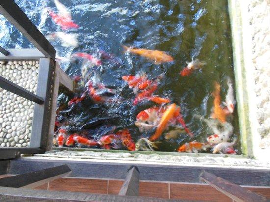 ซูคุน บาหลี คอทเทเจส: Voici les poissons qui ont pris le petit dejeuner avec moi !
