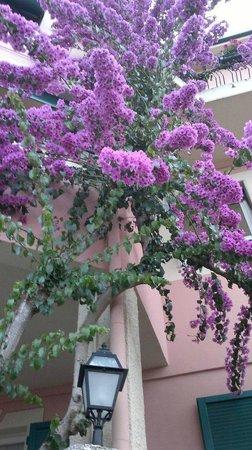 Hotel Villa Europa: garden