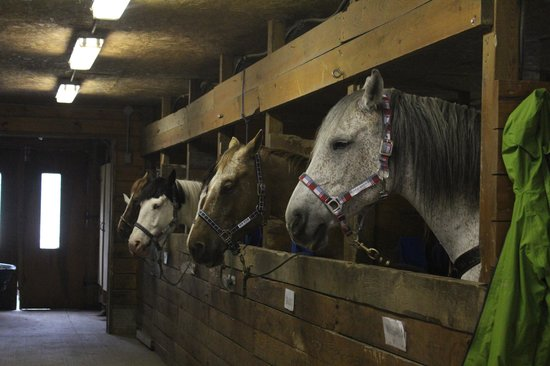 Couples Resort: Stables