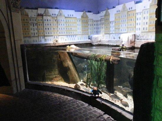 inside the aqua dom lift picture of aquadom sea life berlin berlin tripadvisor. Black Bedroom Furniture Sets. Home Design Ideas