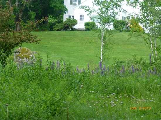 Adair Country Inn & Restaurant: wild flowers in the backyard