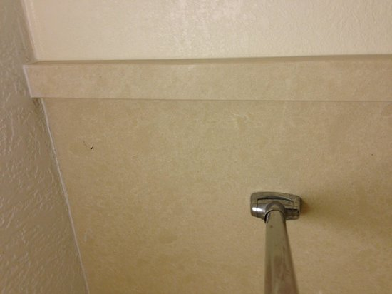 Days Inn Jacksonville Airport: Dead bug on shower wall