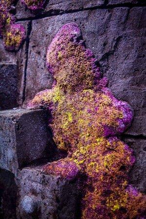 Dingle Oceanworld: Beautiful Coral