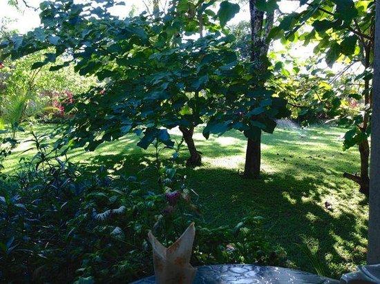 Kia Ora Lodge: View of the garden