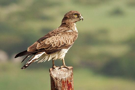 Tarifa Birding Tours: getlstd_property_photo
