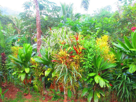 Osa Rainforest Rentals: Plants in the yard