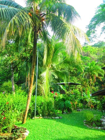 Osa Rainforest Rentals: Well kept grounds