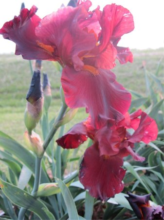 River Gardens Bed and Breakfast, LLC: Spring Irises were blooming in May