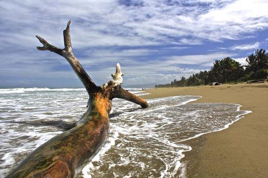 Hotel Celuisma Cabarete: Stranded tree