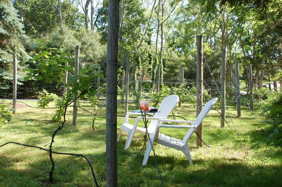 Fig Olive Bed And Breakfast