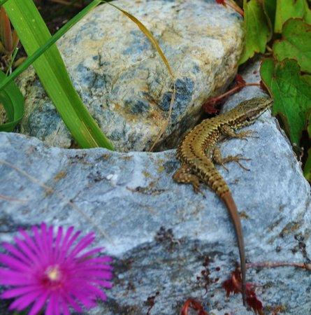 L'Auberge Basque : Nice lizards!