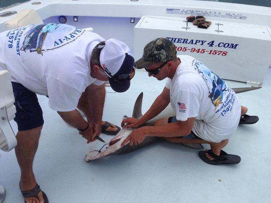 Sportfishing Miami Therapy 4: Pete and Bob removing the hook from the Hammerhead. It was amazing how it settled down as soon a