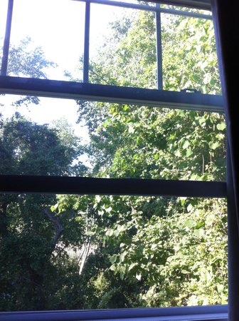 Hyland Motor Inn: Room 106 view: lush woods and wetland beyond, many birds, you forget the parkway