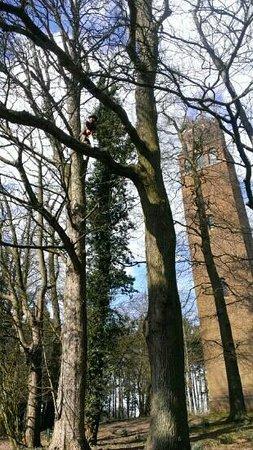 Faringdon Folly Tower and Woodland: Folly