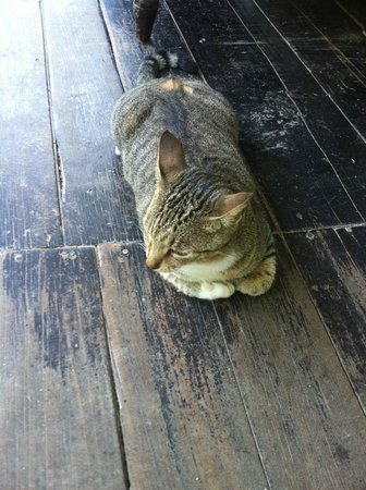 Fond Doux Plantation & Resort : I believe this is Socks the cat--there is another one named Trouble