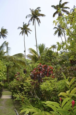 Fond Doux Plantation & Resort : Beautiful views