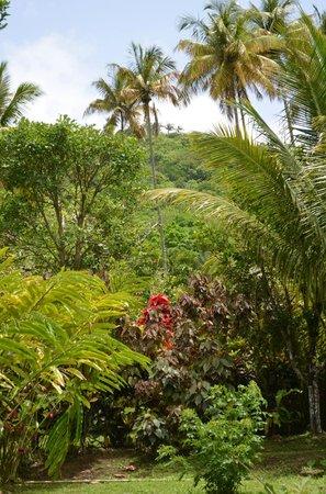 Fond Doux Plantation & Resort : estate tour