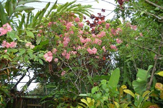 Fond Doux Plantation & Resort : On the estate tour