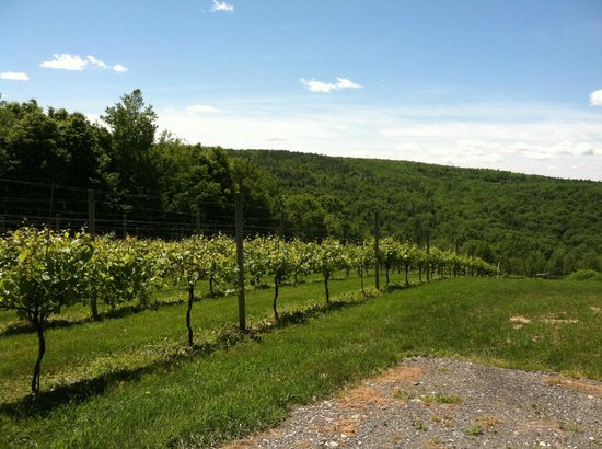 Walpole Mountain View Winery: The view and the vineyard