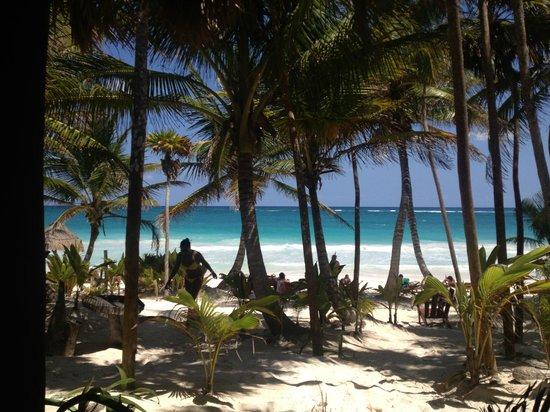 Ixchel Playa & Cabanas: Gaviota
