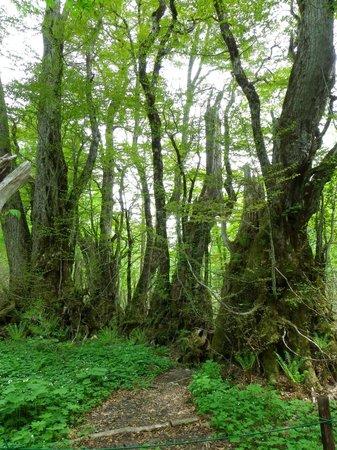 Amo Natural Park: 登山道